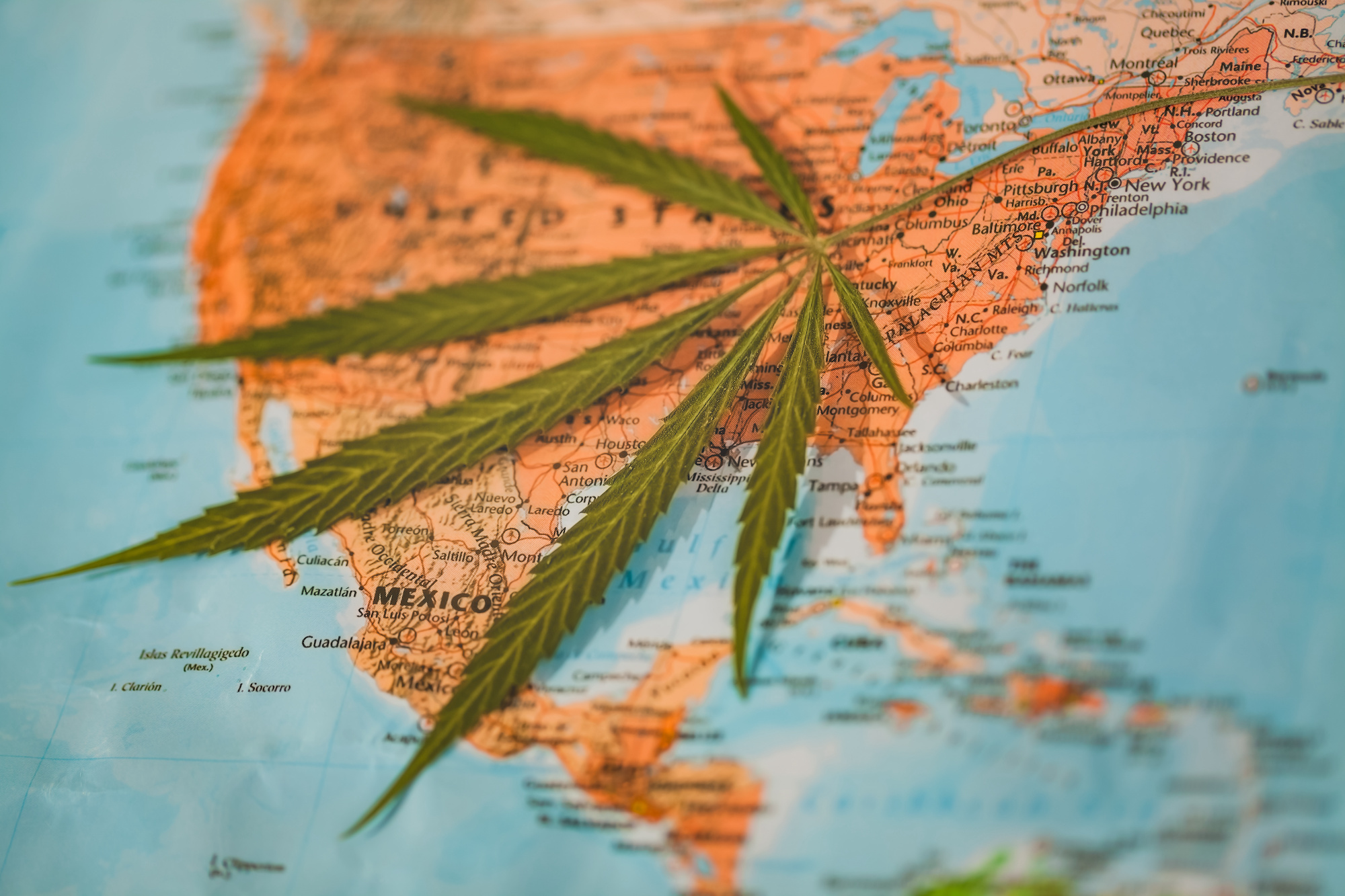 Map of countries with cannabis plant
