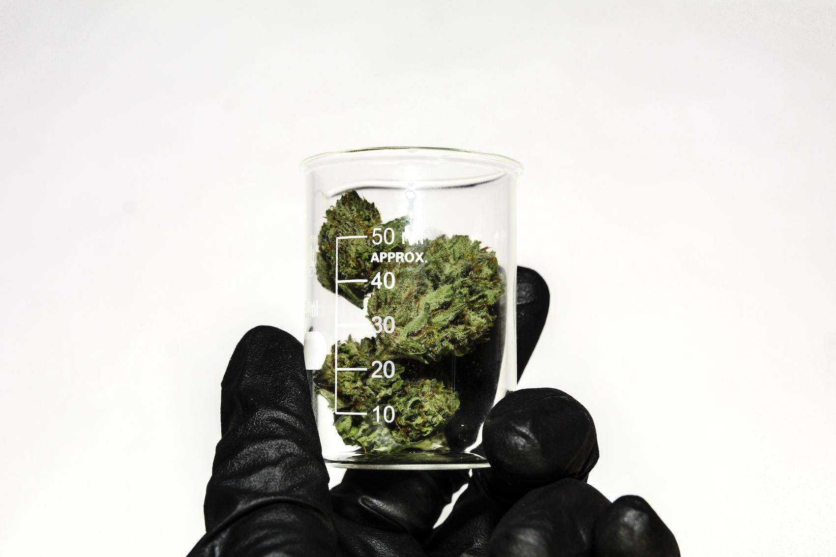 Marijuana flower in drug test jar