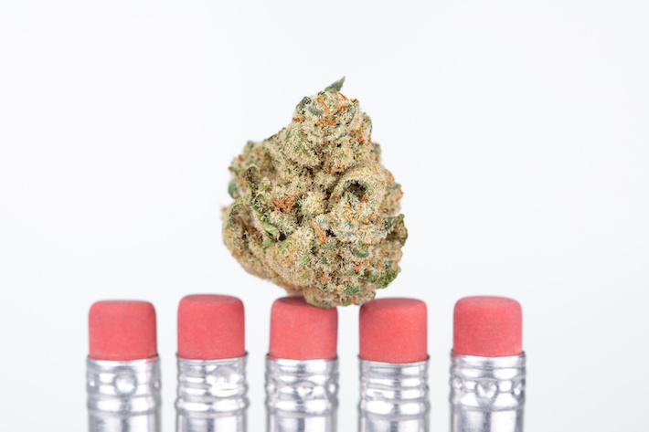 Marijuana flower on pencils